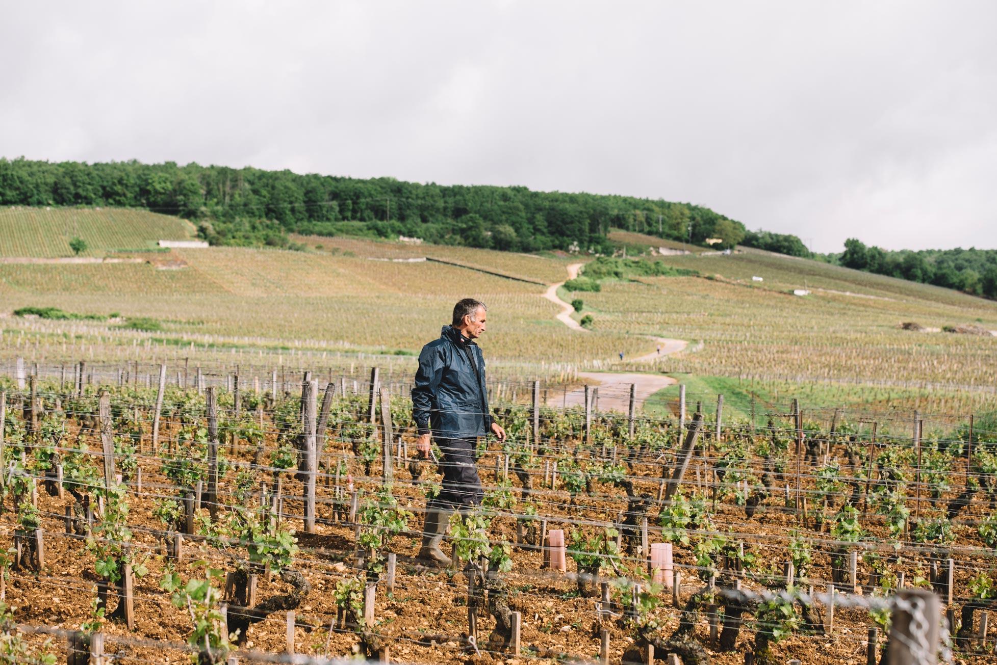 Pratique de taille en vert | Domaine Leroy | Richebourg | Bourgogne
