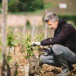 Pratique de taille en vert | Domaine Leroy | Clos de Vougeot | Bourgogne