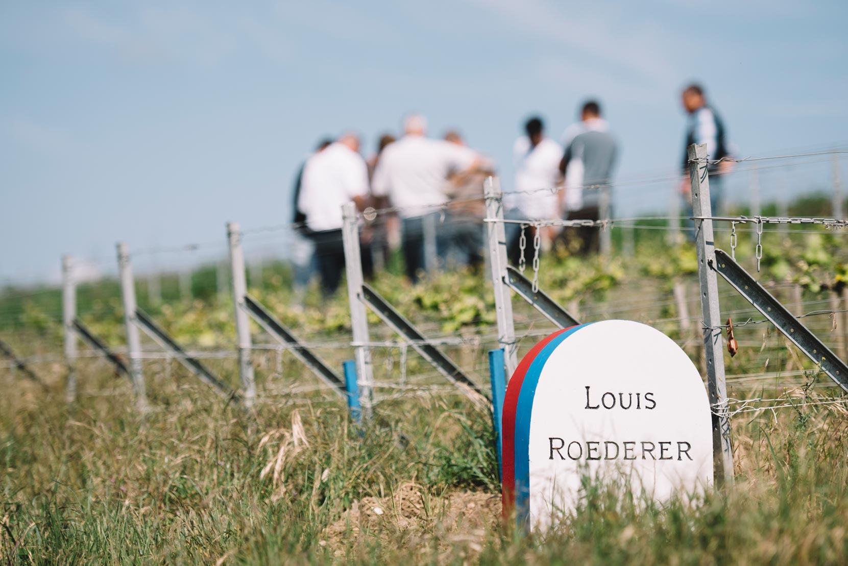Accompagnement   Vallée de la Marne   Champagne