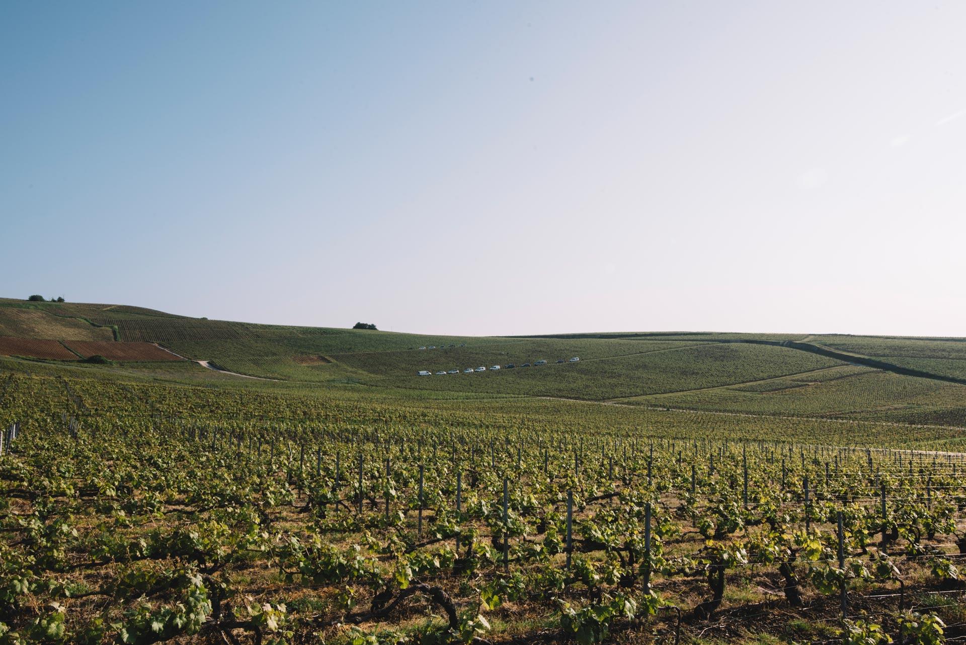 Vallée de la Marne   Champagne