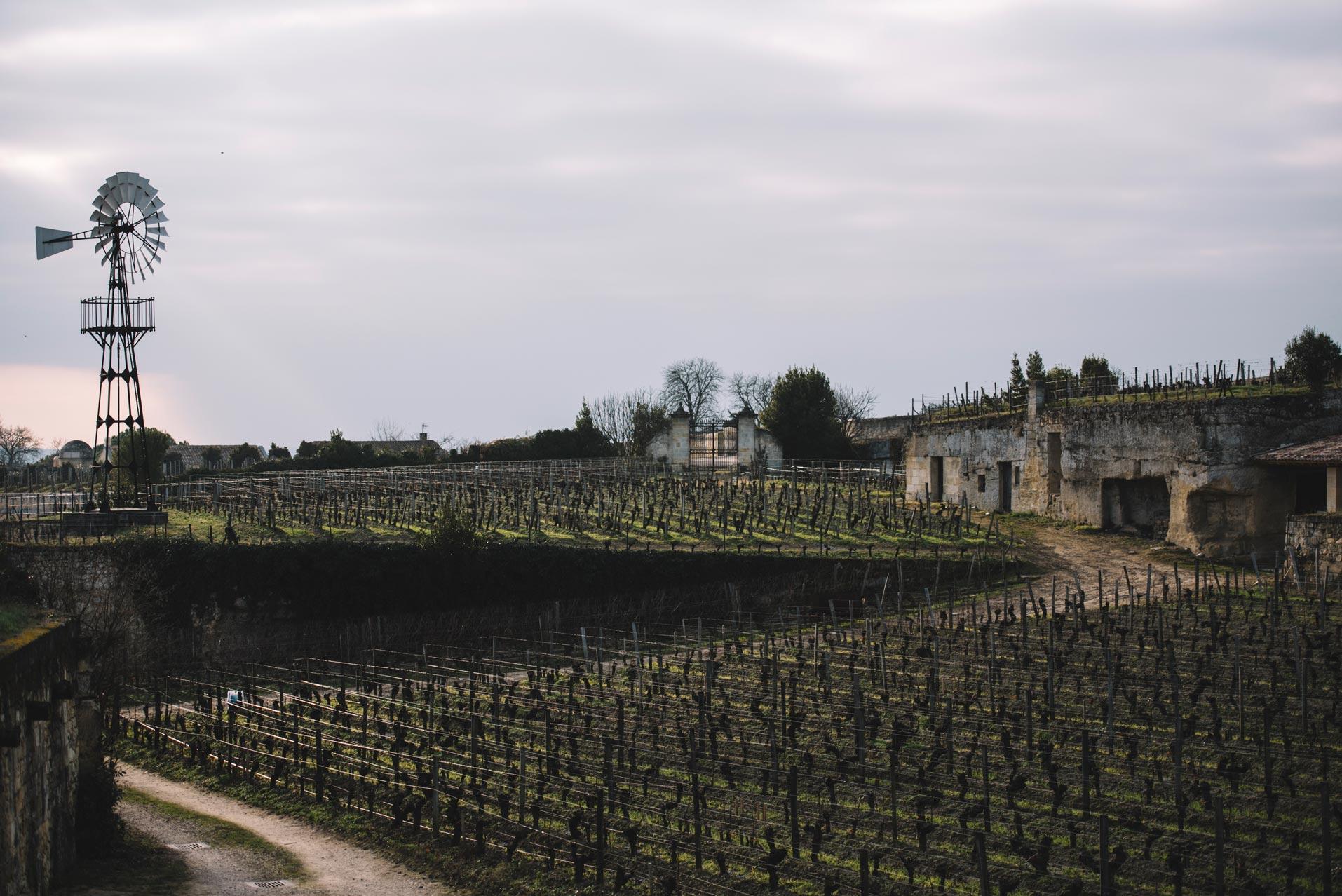 Winter training   Château Ausone   Saint-Émilion   Bordeaux