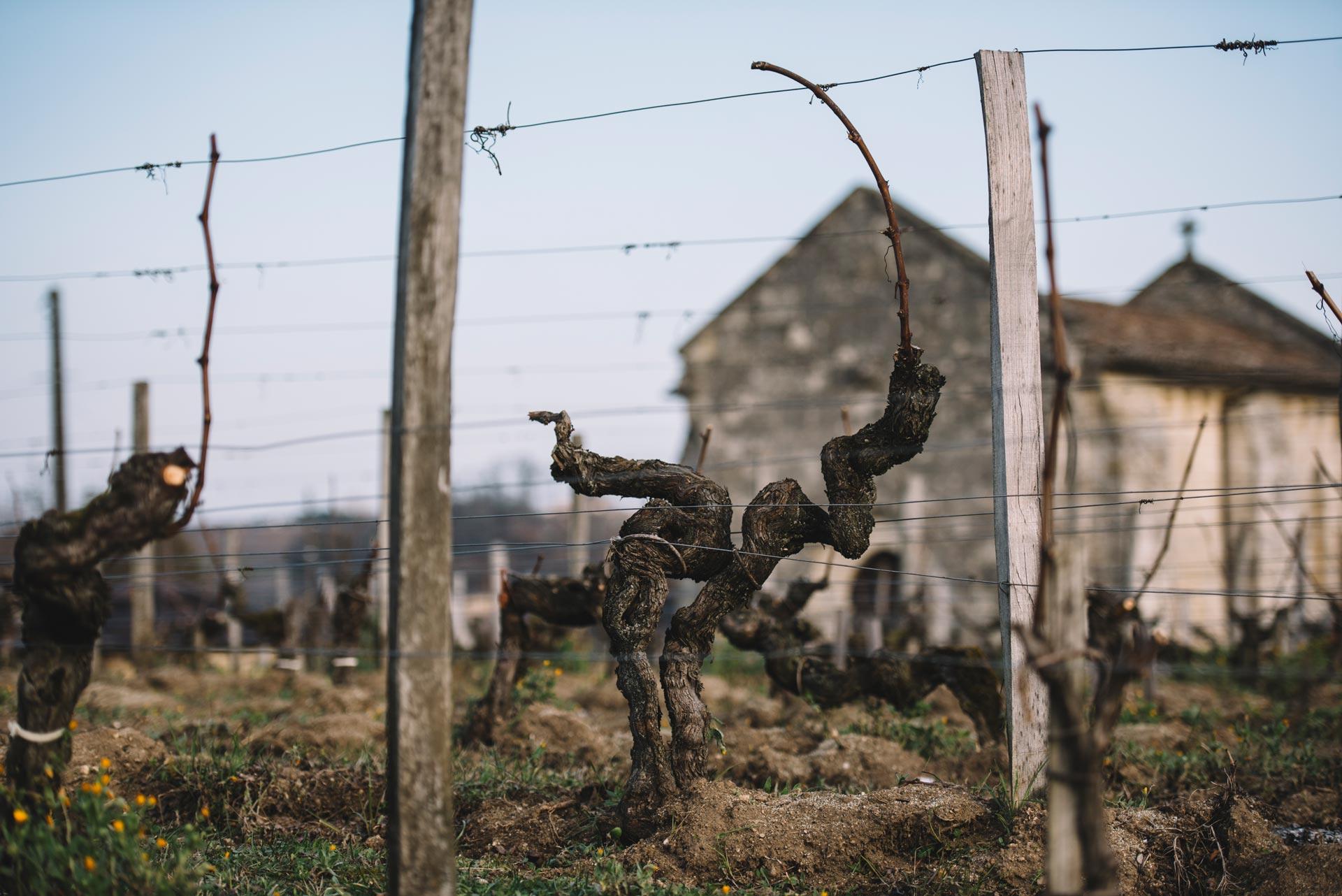 Guyot medoc   Château Ausone   Saint-Émilion   Bordeaux