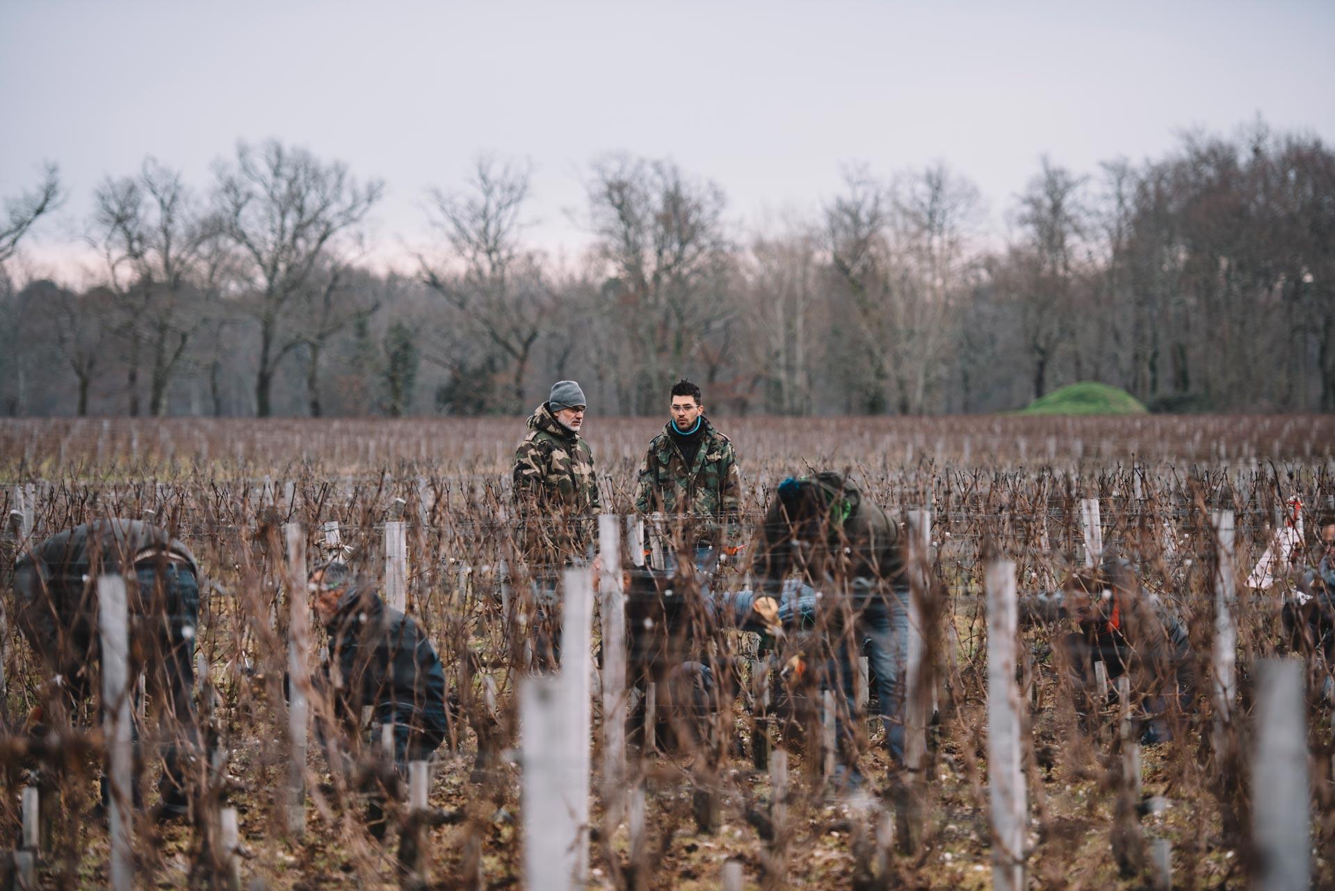 Winter training   Château Haut-Bailly   Pessac   Bordeaux