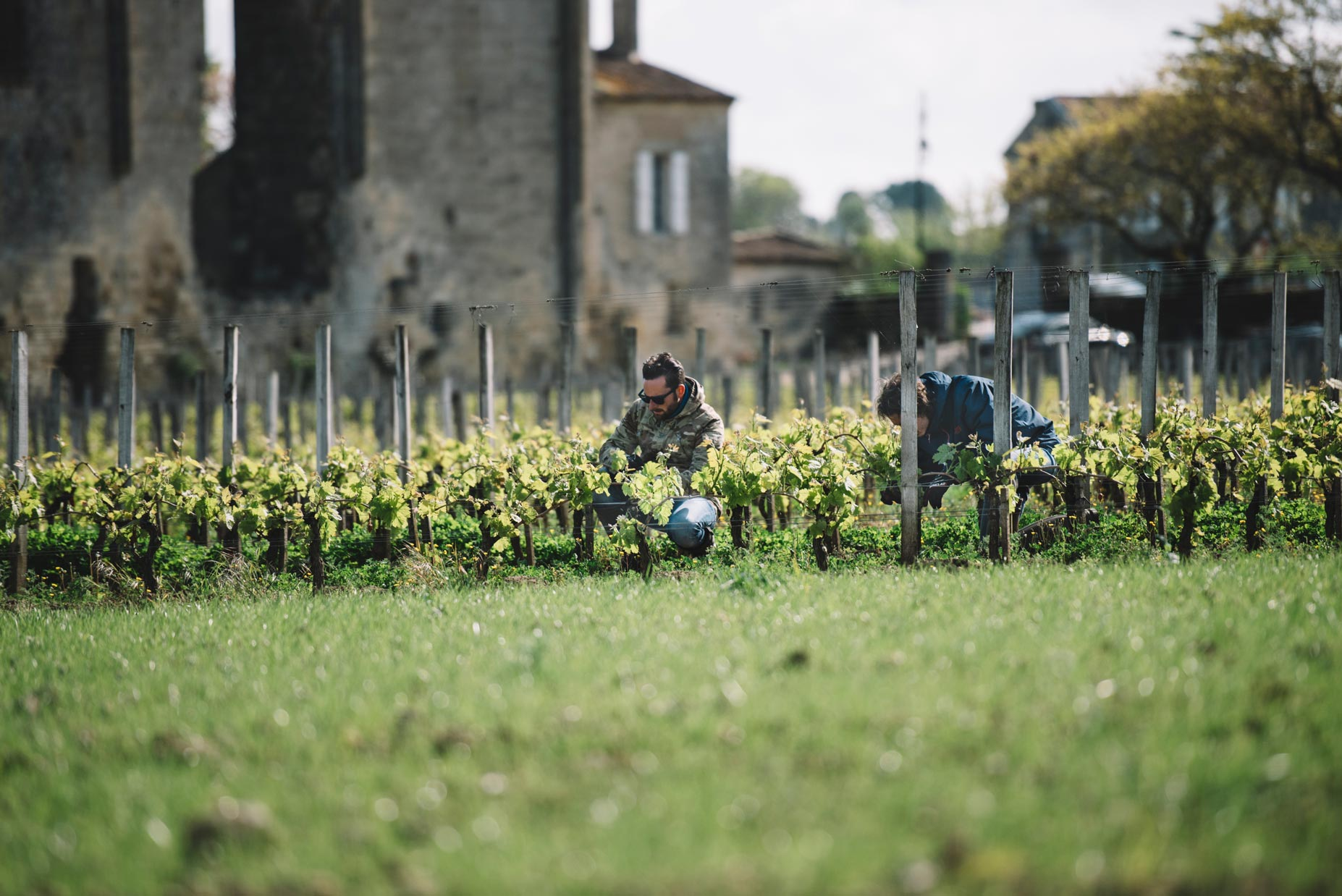 Accompagnement | Château Les Grandes Murailles | Saint Émilion | Bordeaux