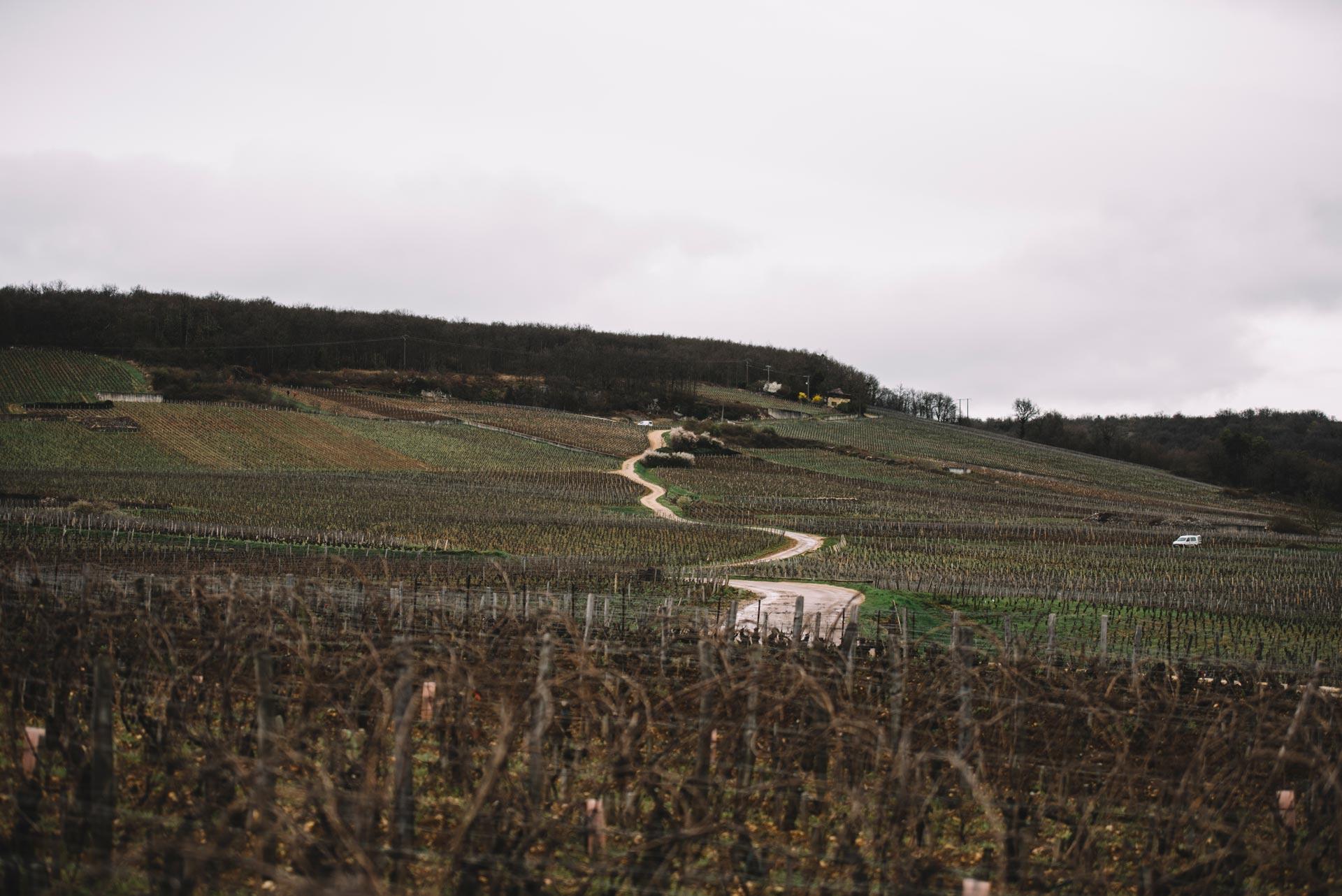Romanée Saint Vivant | Bourgogne