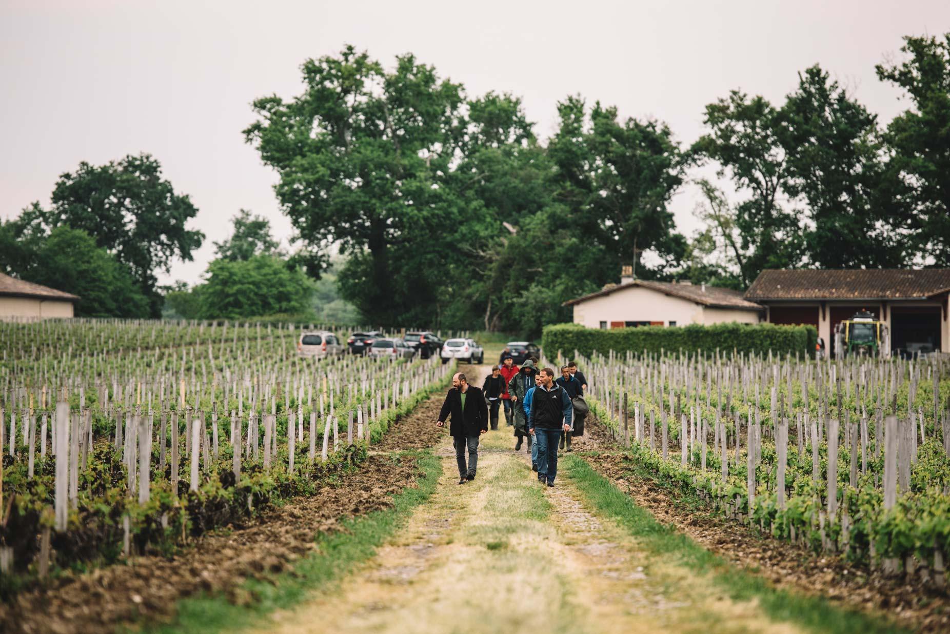Spring training | Château Haut-Bailly | Pessac | Bordeaux