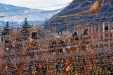 Pruning training | Manincor | Caldaro | Alto Adige | Italy