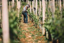 Lavorazione suolo | Domaine Leroy | Richebourg | Bourgogne