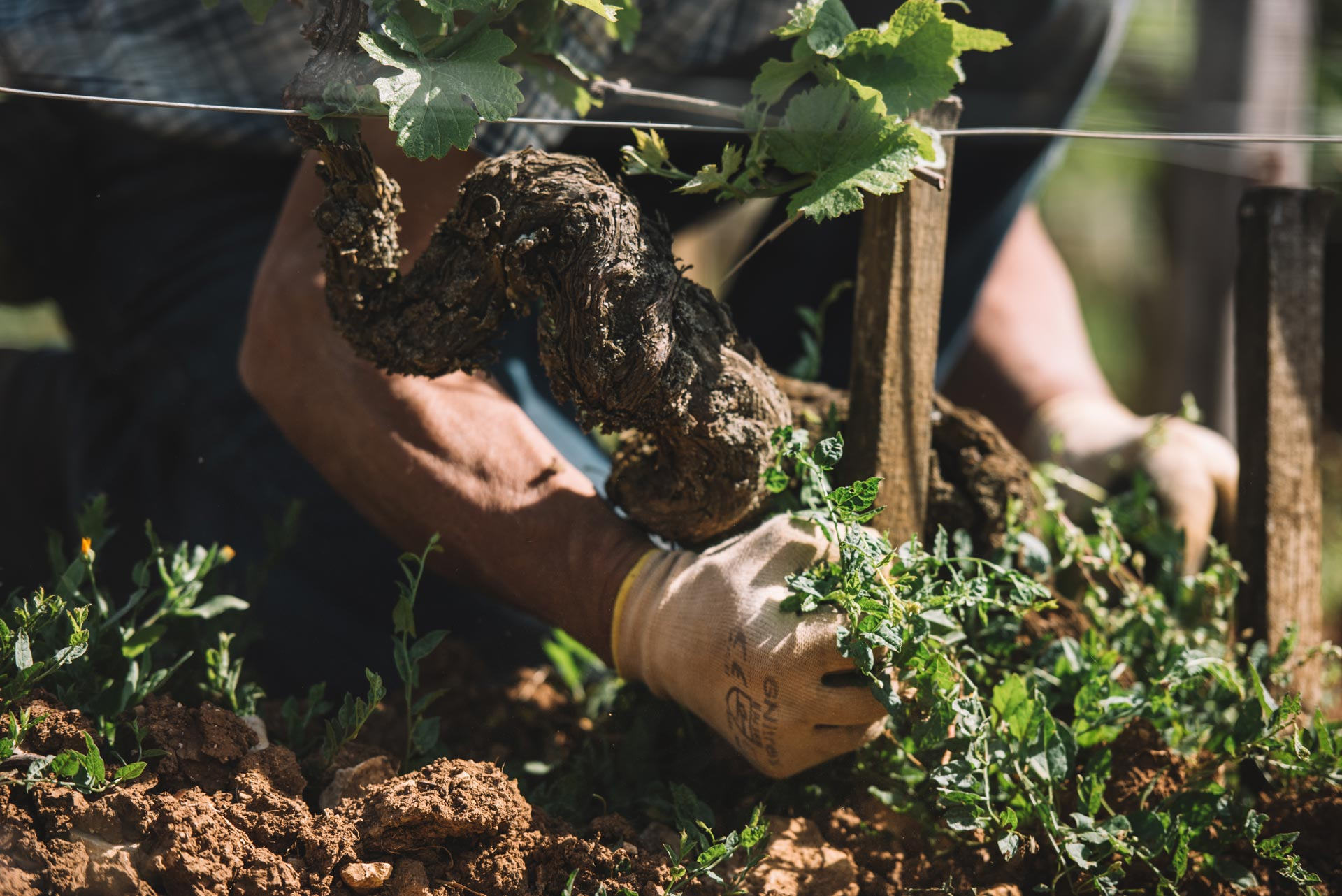 Lavorazione suolo   Domaine Leroy   Richebourg   Bourgogne