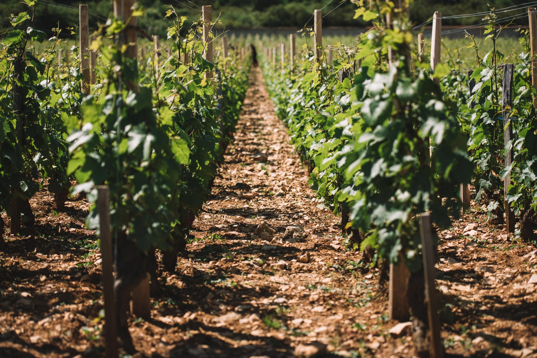 Clos de Vougeot   Domaine Leroy   Bourgogne