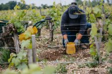 Formation en greffage | Château Pontet-Canet | Pauillac | Bordeaux