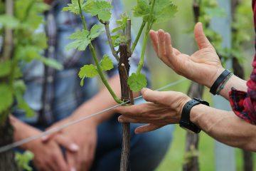 Winery Experience pour NextInWine 2015
