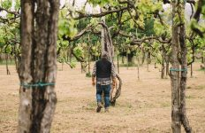 Accompagnement | Feudi di San Gregorio | Taurasi | Campania