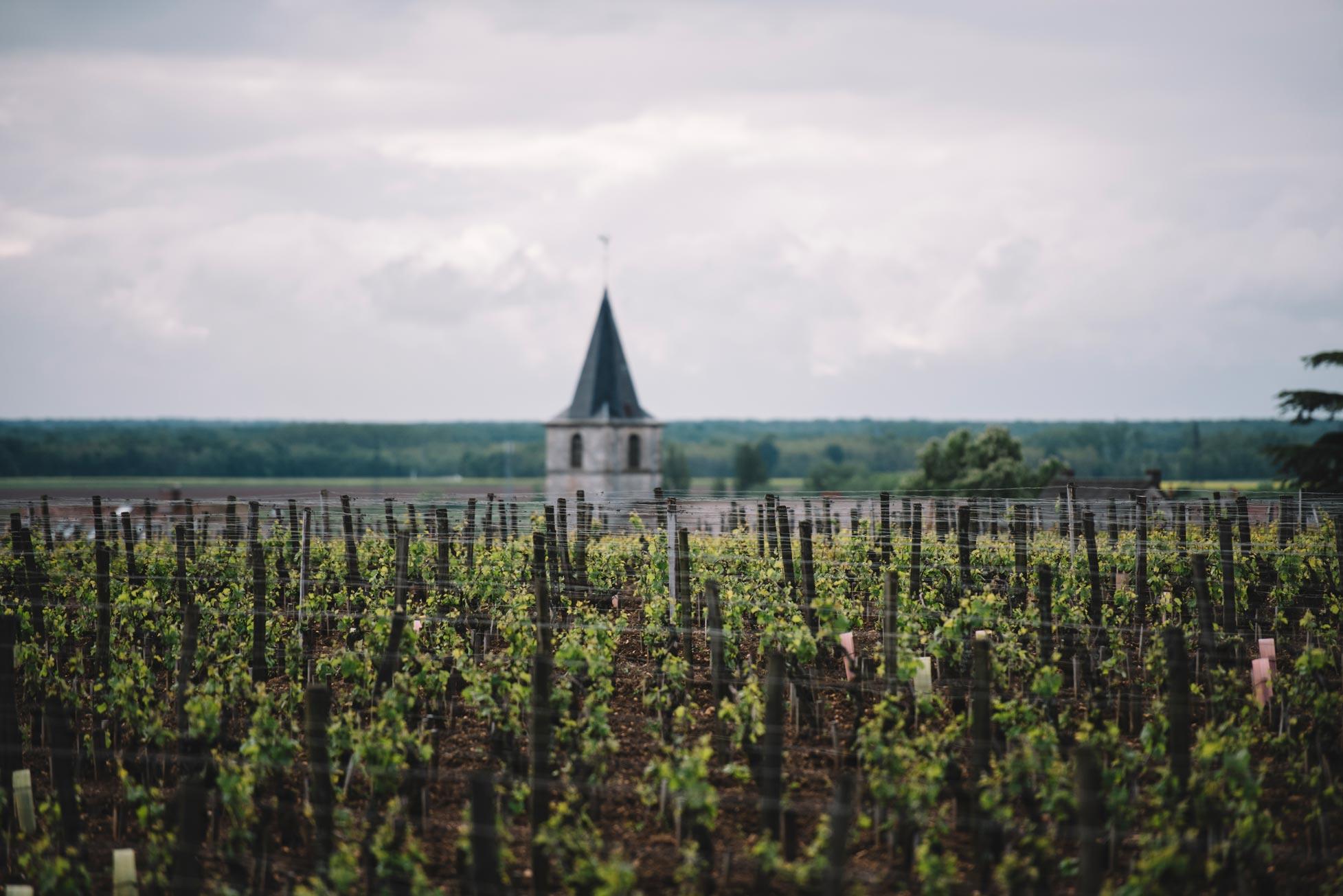 Pratique de taille en vert | Domaine Leroy | Vosne-Romanée | Bourgogne