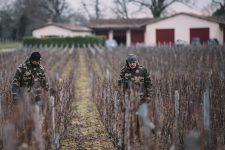 Winter training | Château Haut-Bailly | Pessac | Bordeaux
