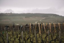 Accompagnement dans les vignes | Domaine Leroy | Romanée Saint Vivant | Bourgogne