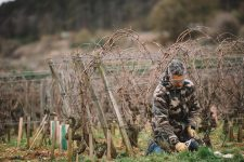 Accompagnement dans les vignes | Domaine d'Auvenay | Bonnes Mares | Bourgogne