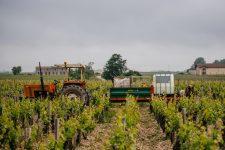 Greffe en fente | Château Pontet-Canet | Pauillac | Bordeaux