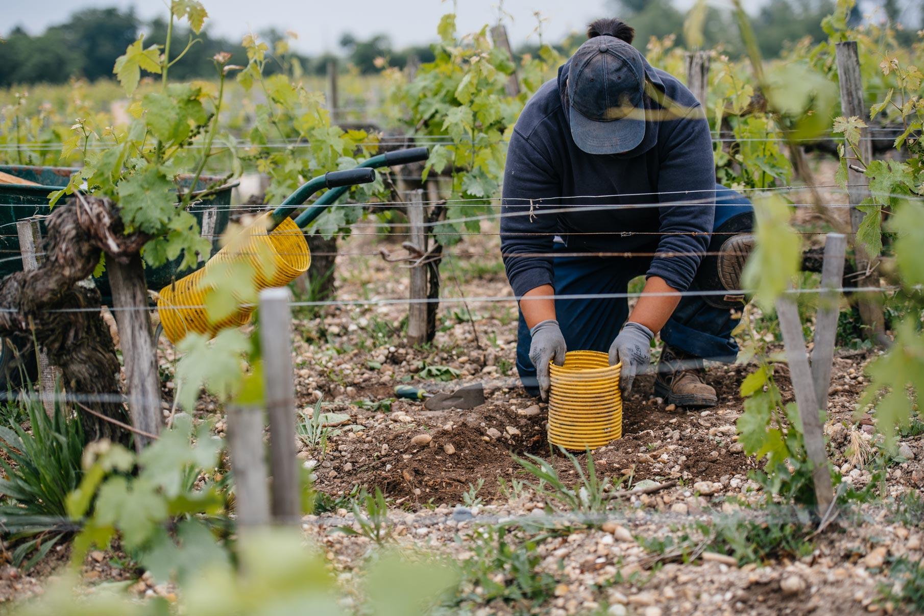 Formation en greffage   Château Pontet-Canet   Pauillac   Bordeaux