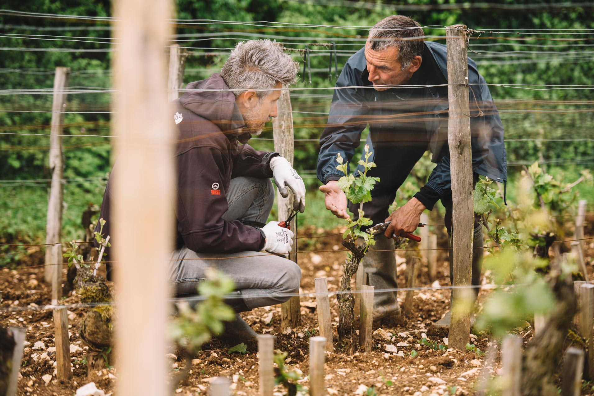 Pratique de taille en vert | Domaine Leroy | Chambertin | Bourgogne