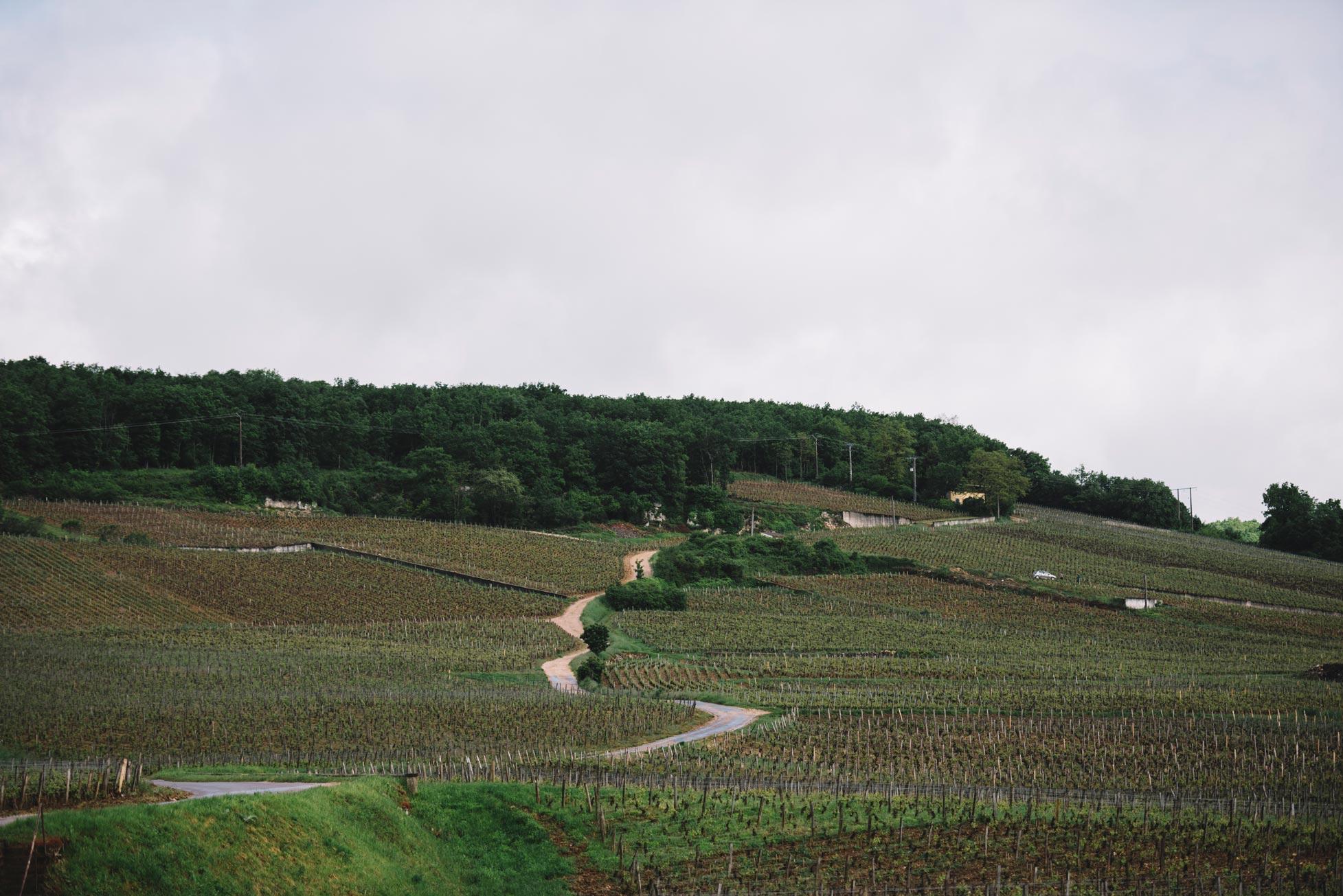 Domaine Leroy | Vosne-Romanée | Côte de Nuits | Bourgogne