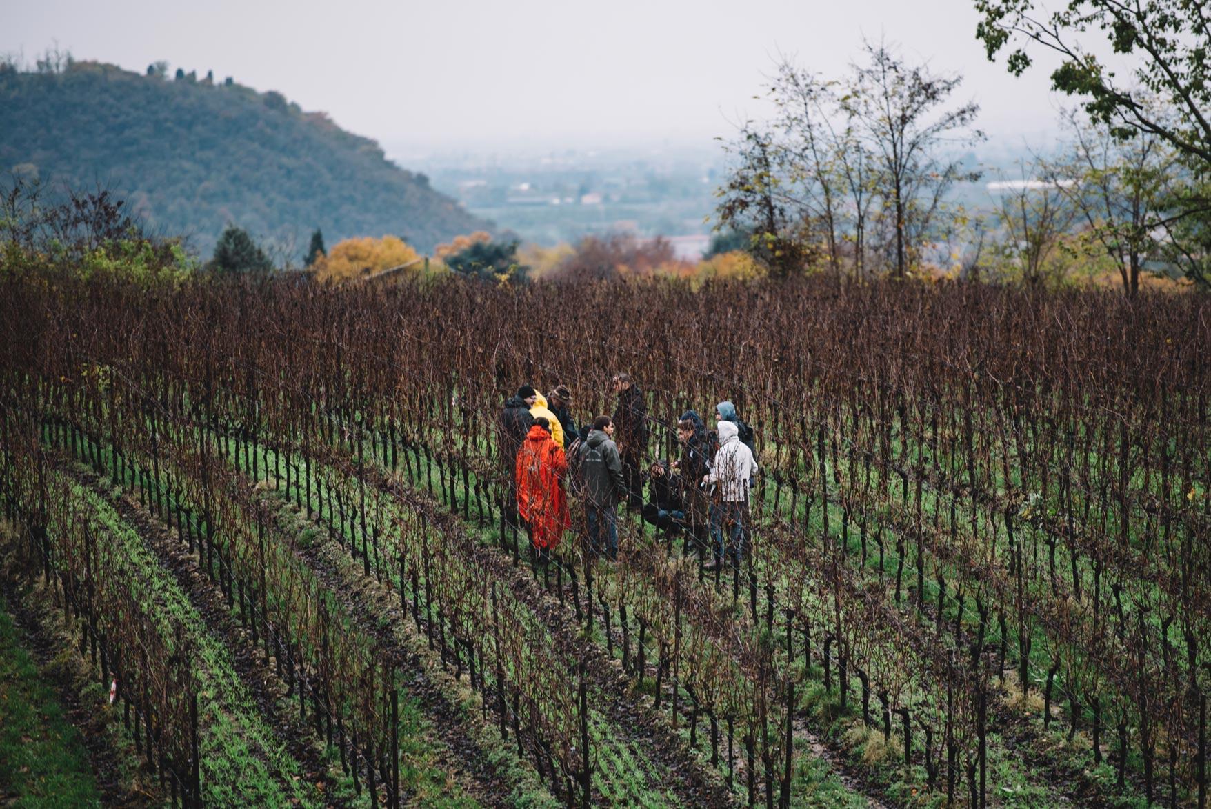 Pratique de la taille | Bellavista | Franciacorta | Lombardia
