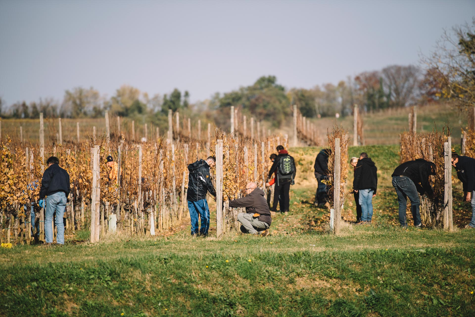 Pratique de taille | Schiopetto | Capriva del Friuli | Collio | Friuli Venezia Giulia
