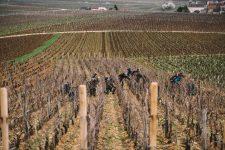 Accompagnement dans les vignes | Domaine Leroy | Richebourg | Bourgogne