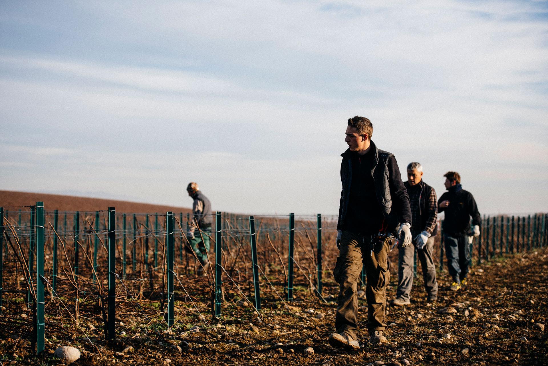 Pruning team | Ca del Bosco | Franciacorta | Italy