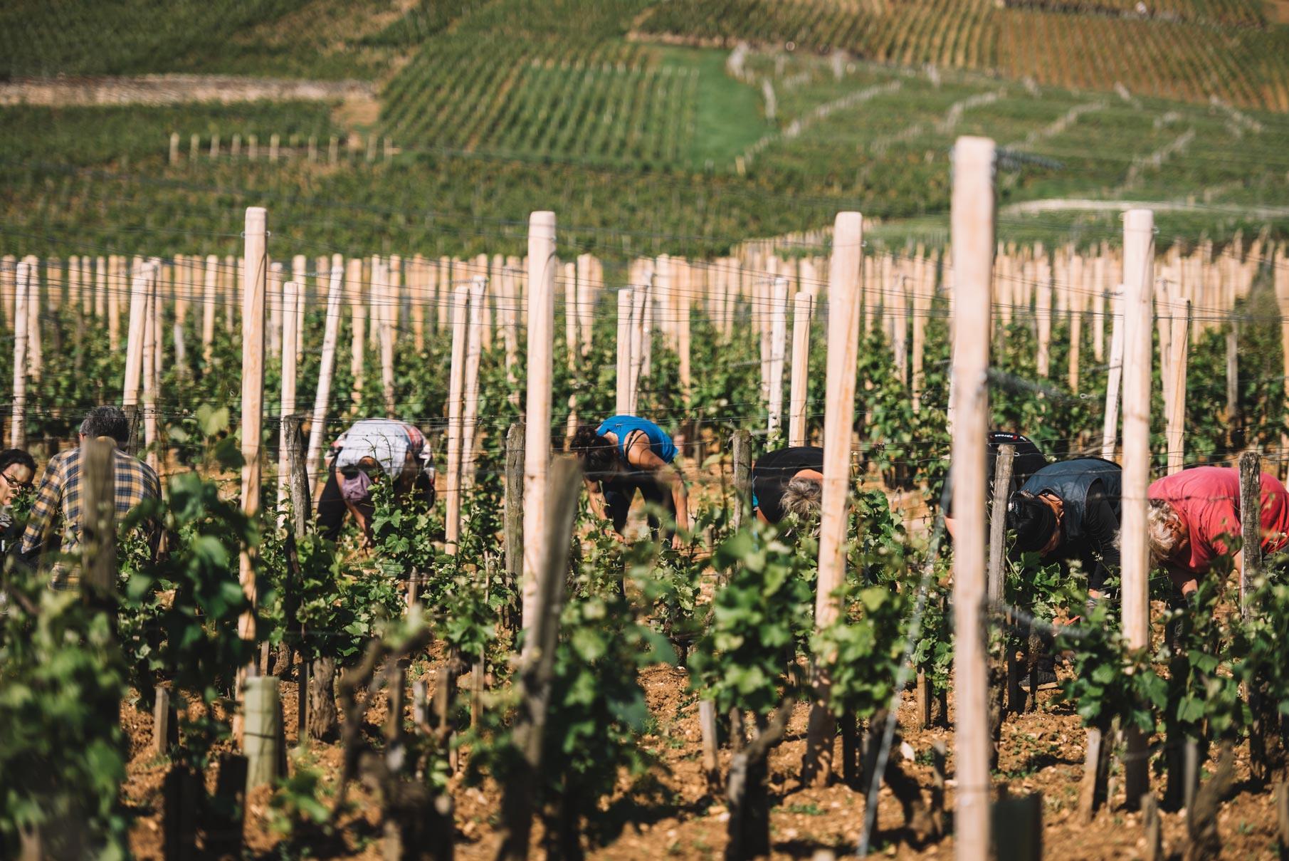 Epamprage | Domaine Leroy | Romanée Saint Vivant | Bourgogne