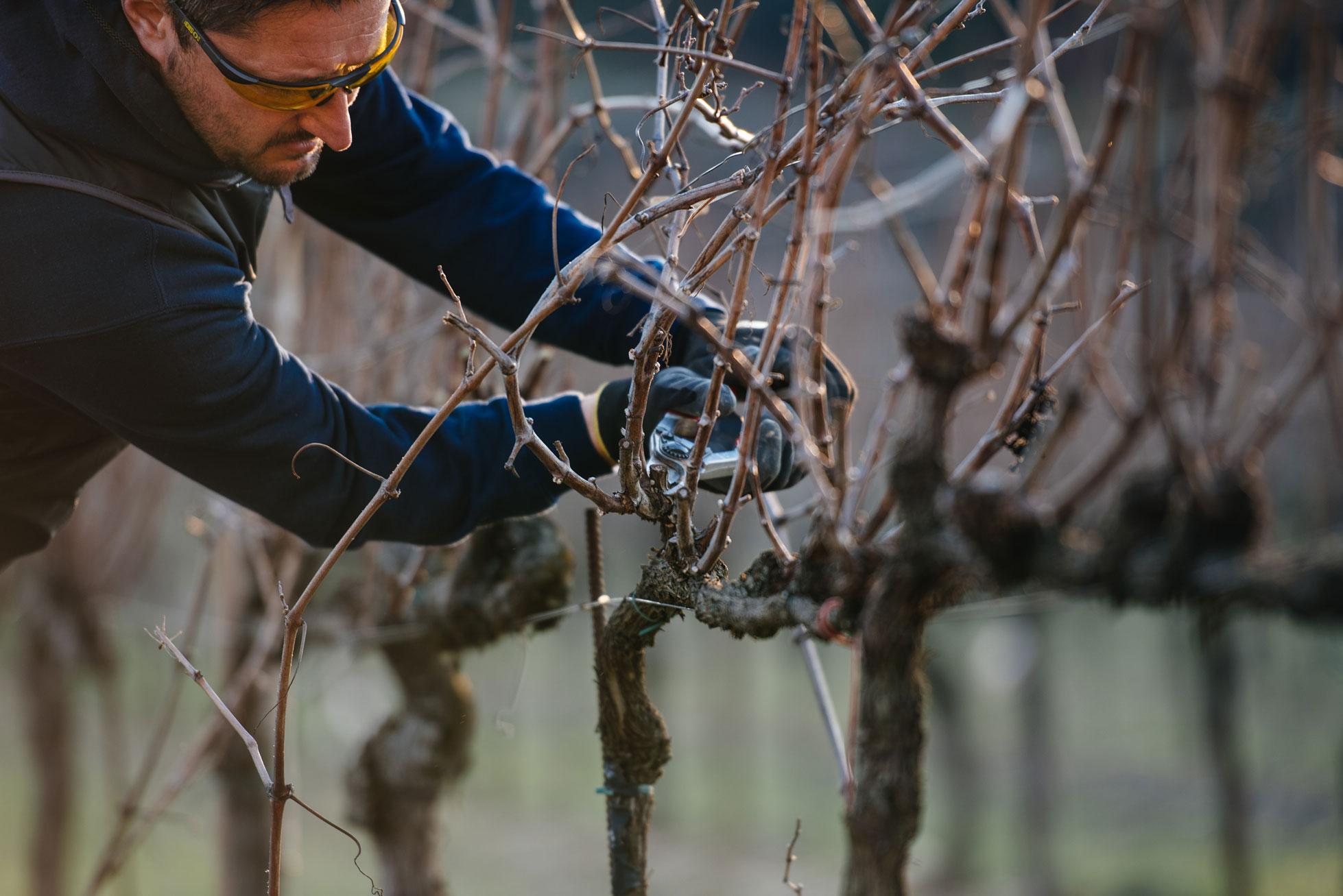 Accompagnement dans les vignes   Bellavista   Franciacorta