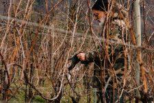Accompagnement dans les vignes | Bellavista | Franciacorta