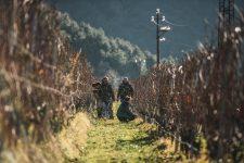 Formation pour la taille d'hiver du Guyot | Ferrari | Trento