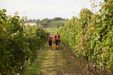 WORKSHOP en gestion des maladies du bois – Bordeaux
