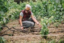 Analyse préliminaire | Louis Roederer | Champagne
