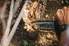 Dendrochirurgie | Louis Roederer | Champagne