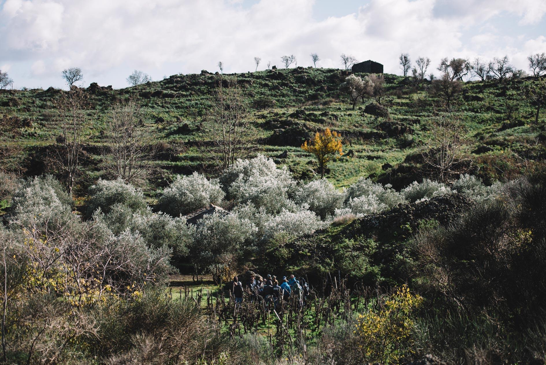 Pratique de taille | Planeta | Passopisciaro | Sicilia