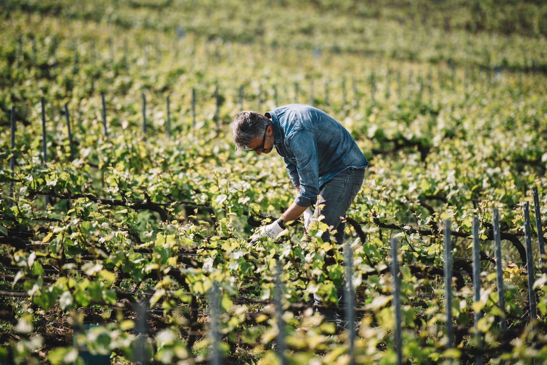 Accompagnement | Vallée de la Marne | Champagne