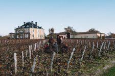 Accompagnement | Château Haut-Bailly | Pessac | Bordeaux
