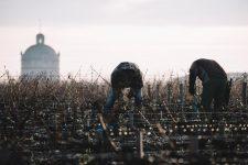Accompagnement dans les vignes | Château Latour | Pauillac | Bordeaux