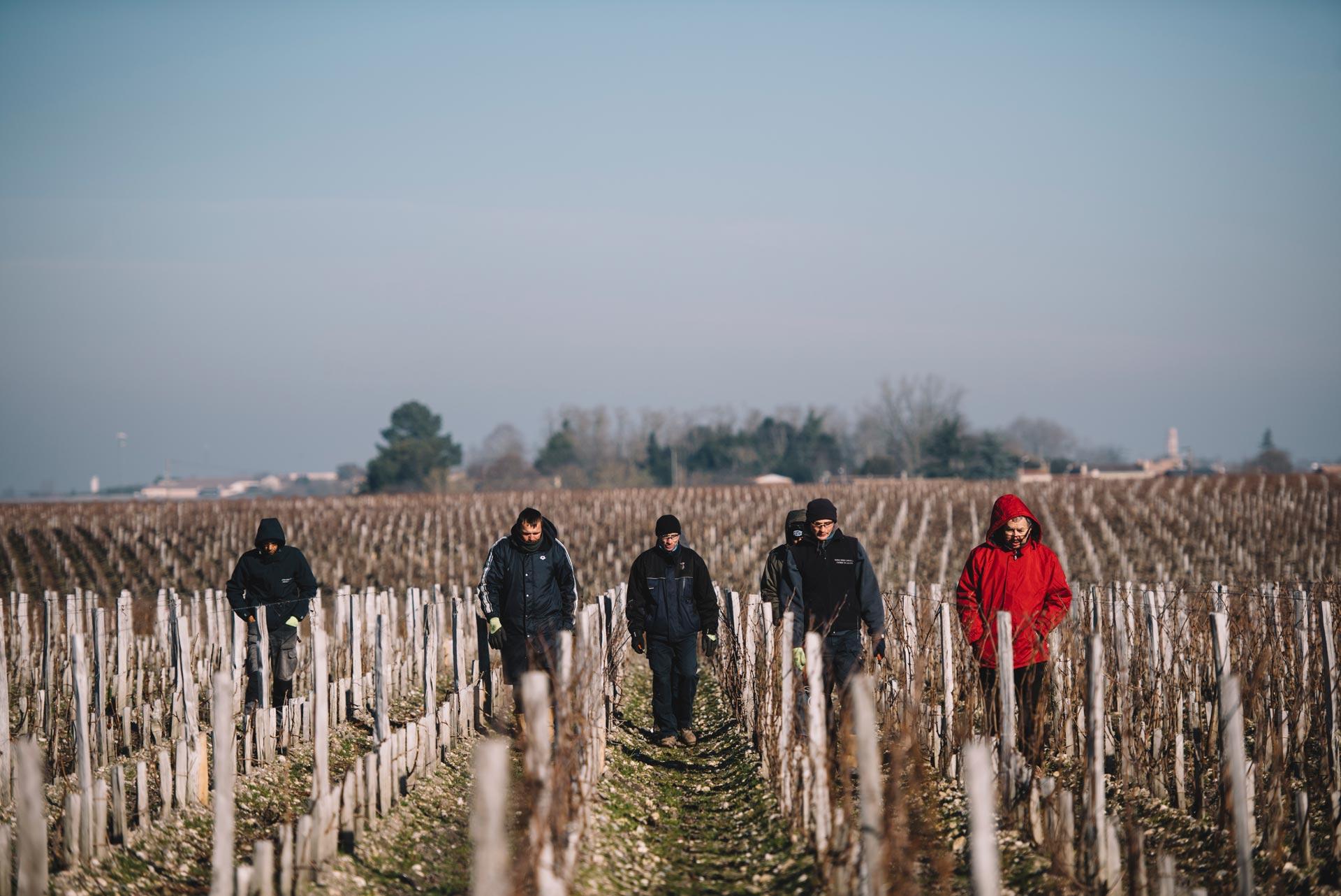 Winter training | Château Pichon Longueville Comtesse de Lalande | Pauillac | Bordeaux