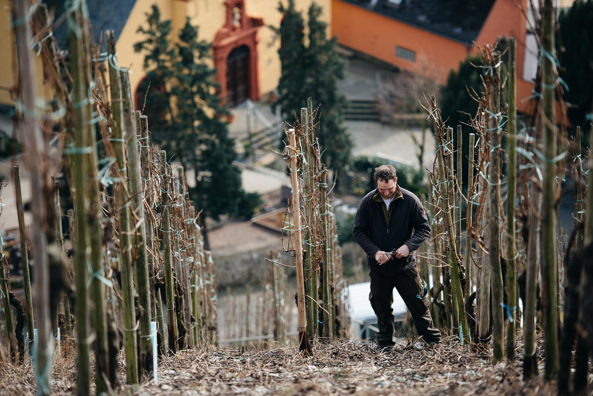 Taille d'hiver, Selbach Oster, Mosel, Germany