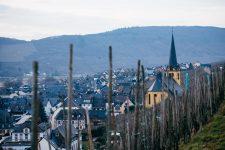 Zeltingen, vignoble Shmitt, Selbach Oster, Mosel, Germany