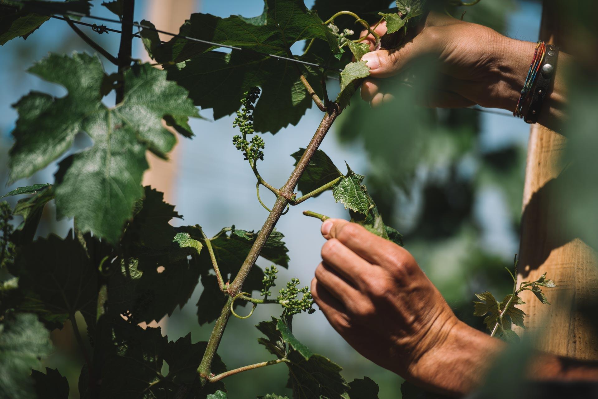 Epamprage | Domaine Leroy | Montrachet | Bourgogne