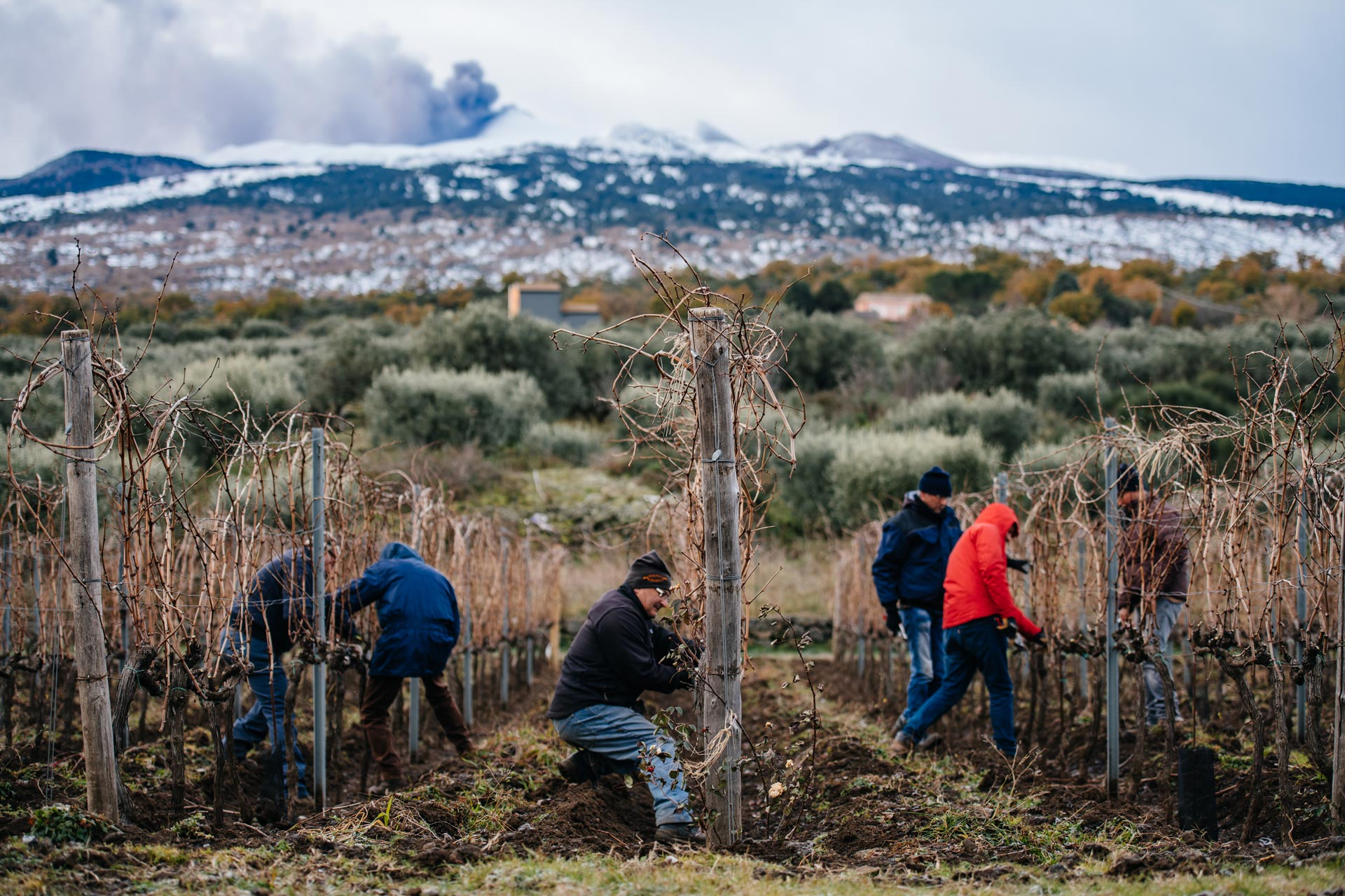 Formation en taille d'hiver | Tenuta delle Terrenere | Etna | Sicile